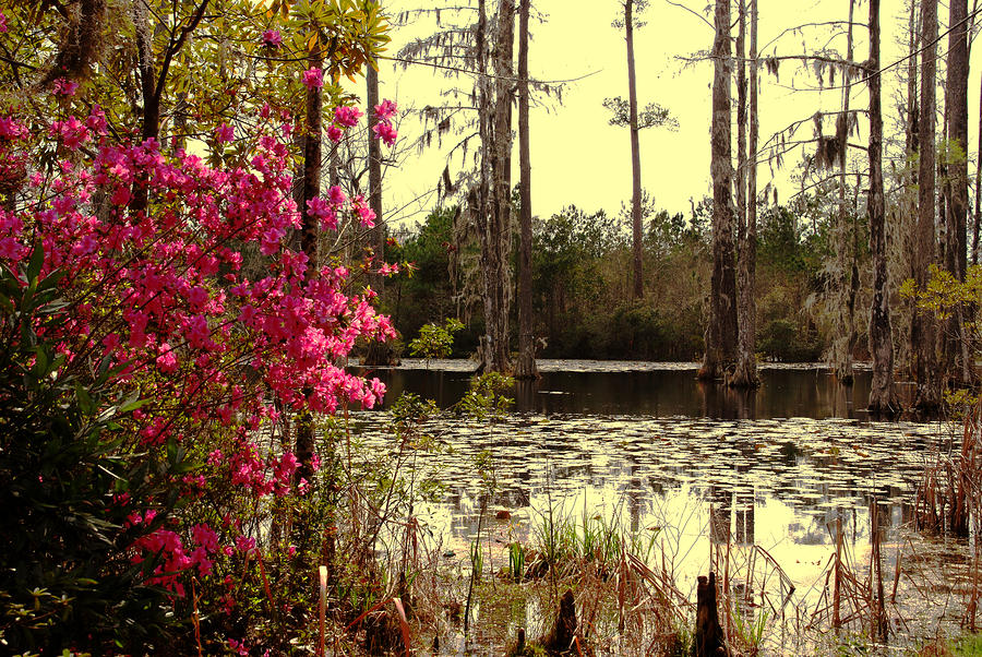Springtime In The Swamp Photograph