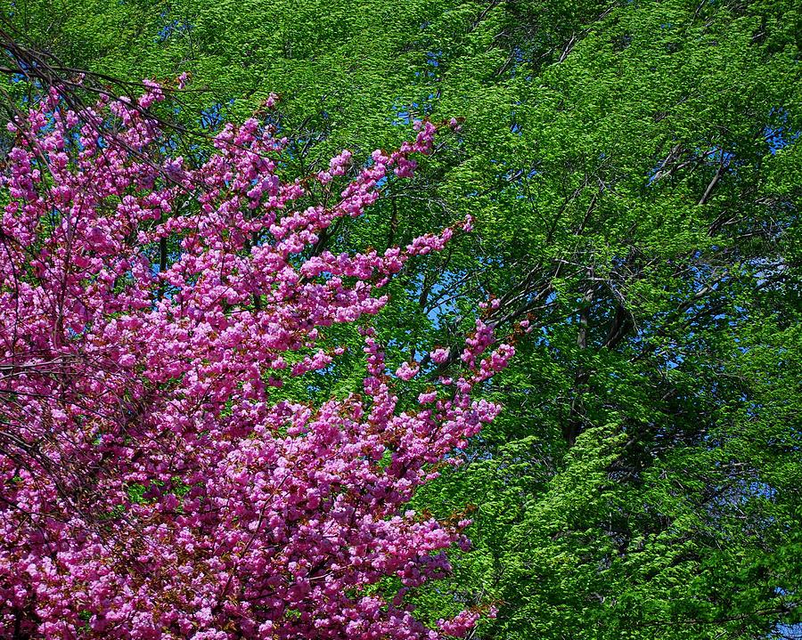 Seasons Photograph - Springtime by Lisa Phillips