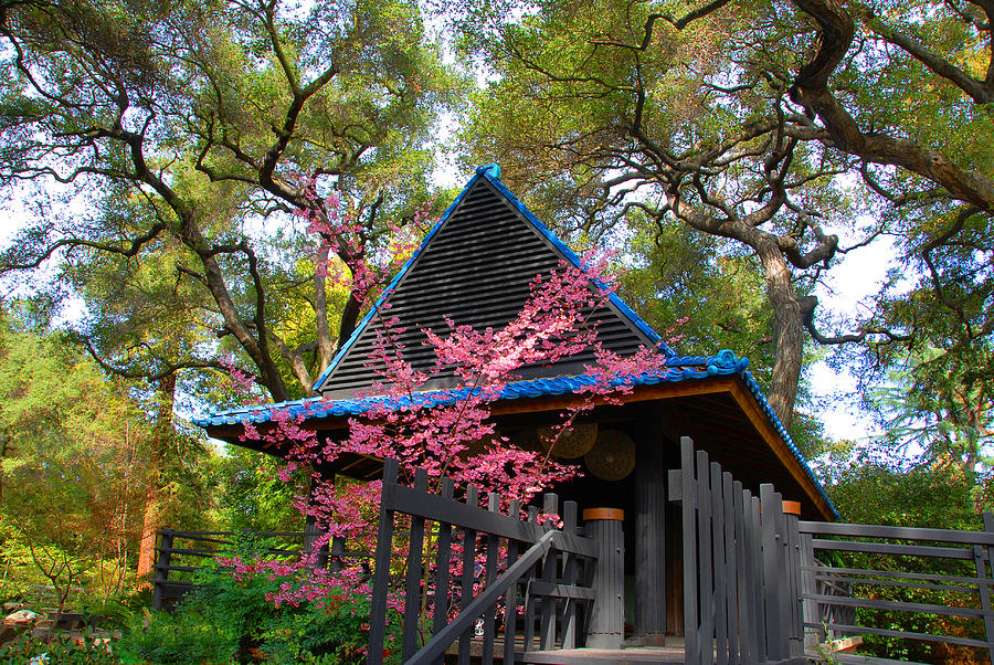 Springtime Pagoda Photograph  - Springtime Pagoda Fine Art Print