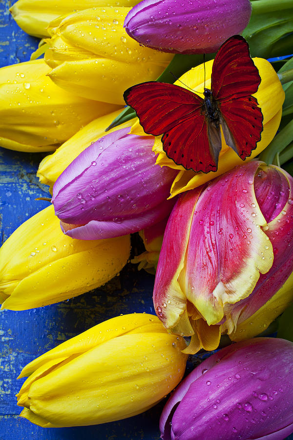 Springtime Tulips And Red Butterfly Photograph