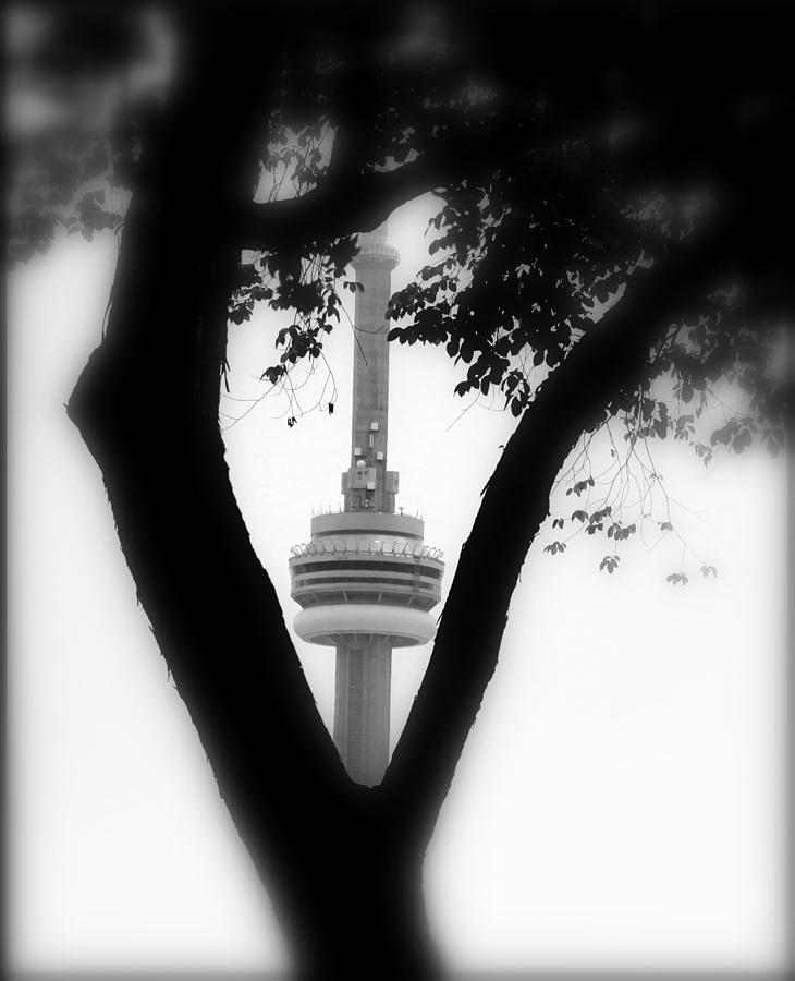 Sprouting Modernity Photograph