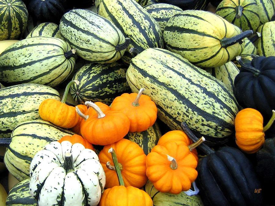 Squash Harvest Photograph