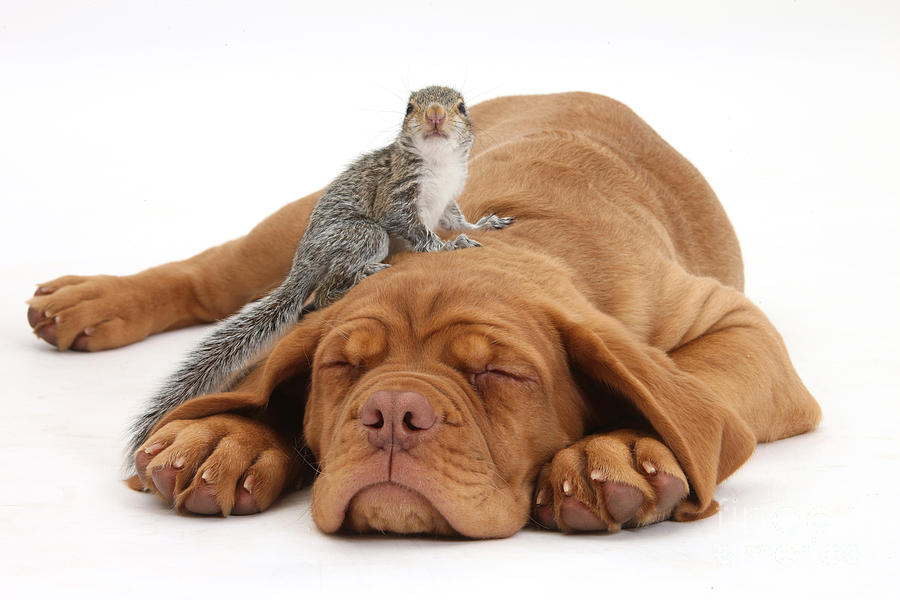 Squirrel And Puppy Photograph