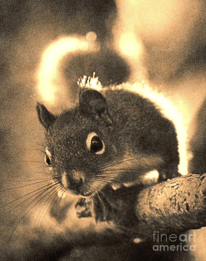 Squirrel In Sepia Photograph