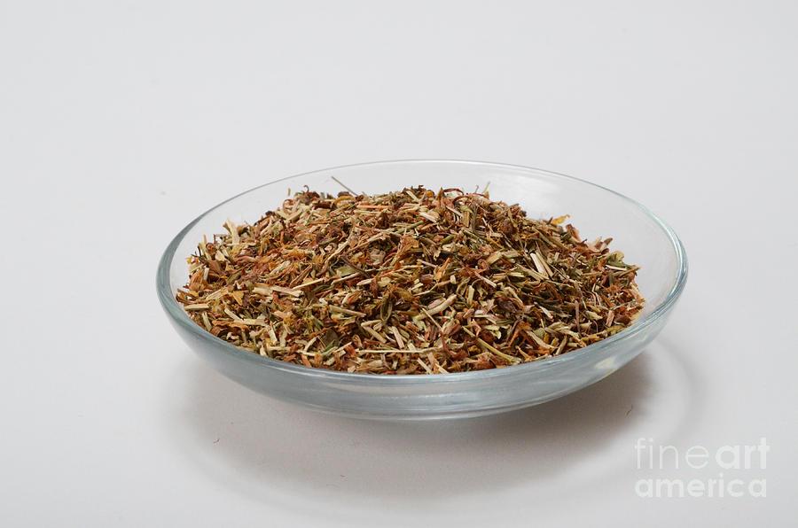 St Johns Wort Dried Herb Photograph