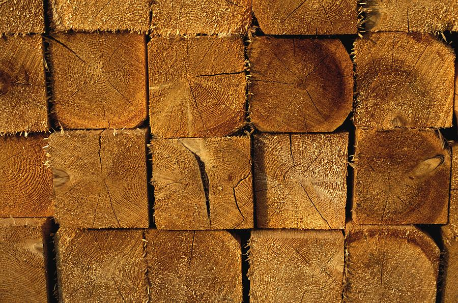 Stack Of Logs Photograph  - Stack Of Logs Fine Art Print