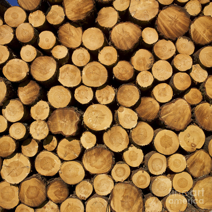 Stack Of Wood Logs. Photograph  - Stack Of Wood Logs. Fine Art Print