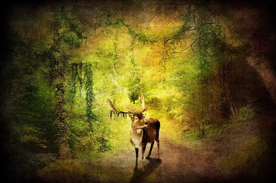 Artistic Digital Art - Stag by Svetlana Sewell