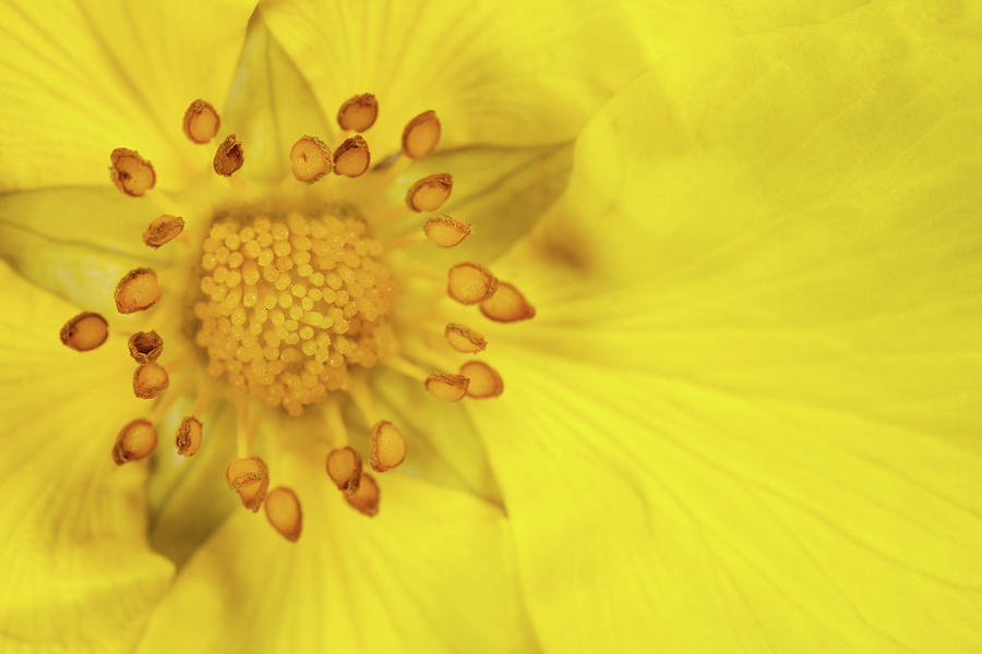 Horizontal Photograph - Stamen by Billy Currie Photography