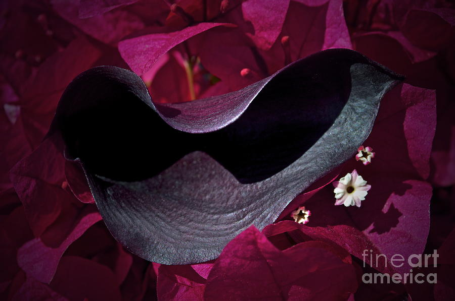 Calla Lilly Photograph - Standing Out by Gwyn Newcombe