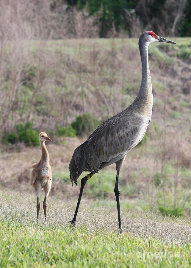 Bird Photograph - Standing Tall by Carol Groenen