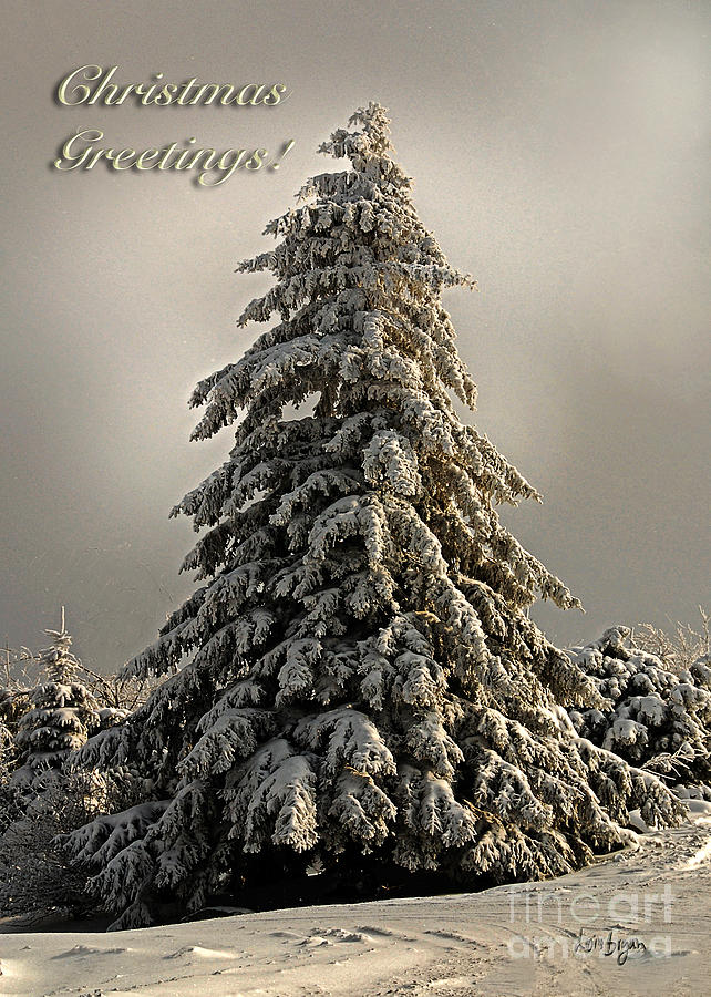 Standing Tall Christmas Card Photograph  - Standing Tall Christmas Card Fine Art Print