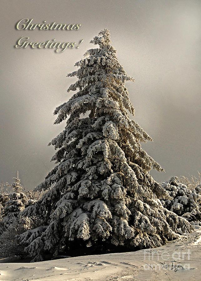 Standing Tall Christmas Card Photograph