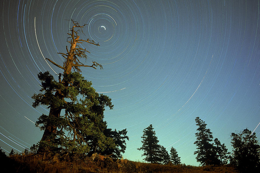 Star Trails, North Star And Old Douglas Photograph  - Star Trails, North Star And Old Douglas Fine Art Print