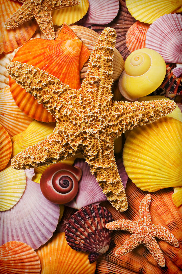 Starfish And Seashells  Photograph