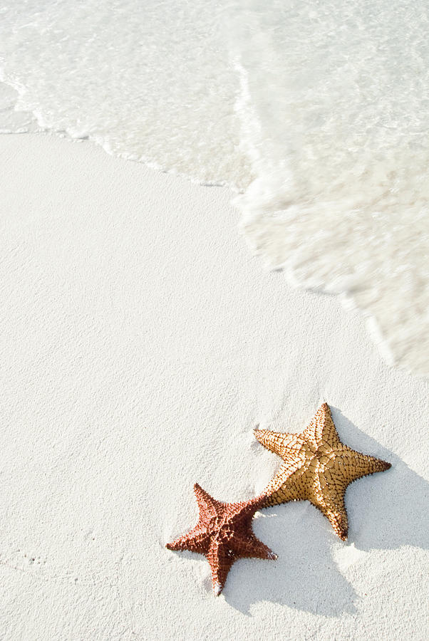 Starfish On Tropical Beach Photograph