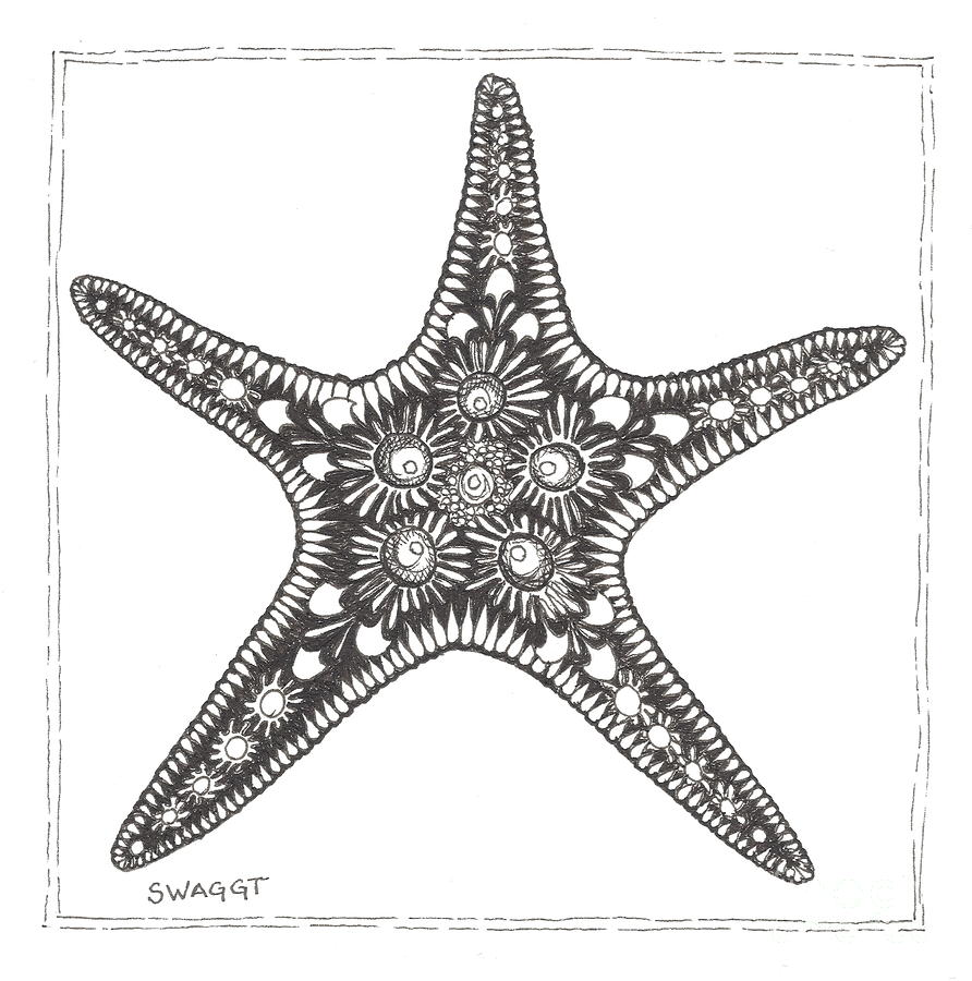 Starfish Drawing  - Starfish Fine Art Print