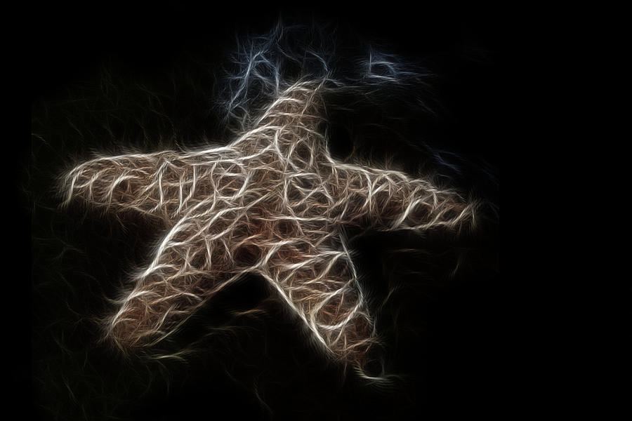 Starfish Digital Art  - Starfish Fine Art Print