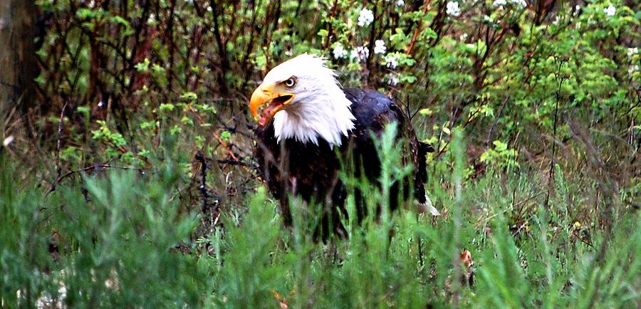 Eagle Digital Art - Stay Away From My Dinner by Don Mann
