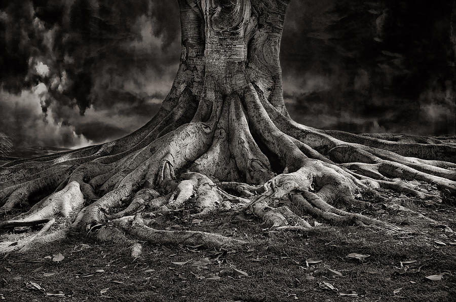 Tree Photograph - Stay Deeply Rooted While Reaching For The Sky by Bob Kramer
