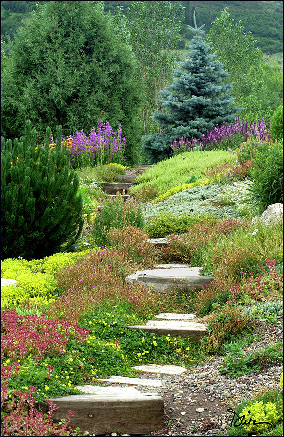 Steamboat Garden Path By Peggy Dietz