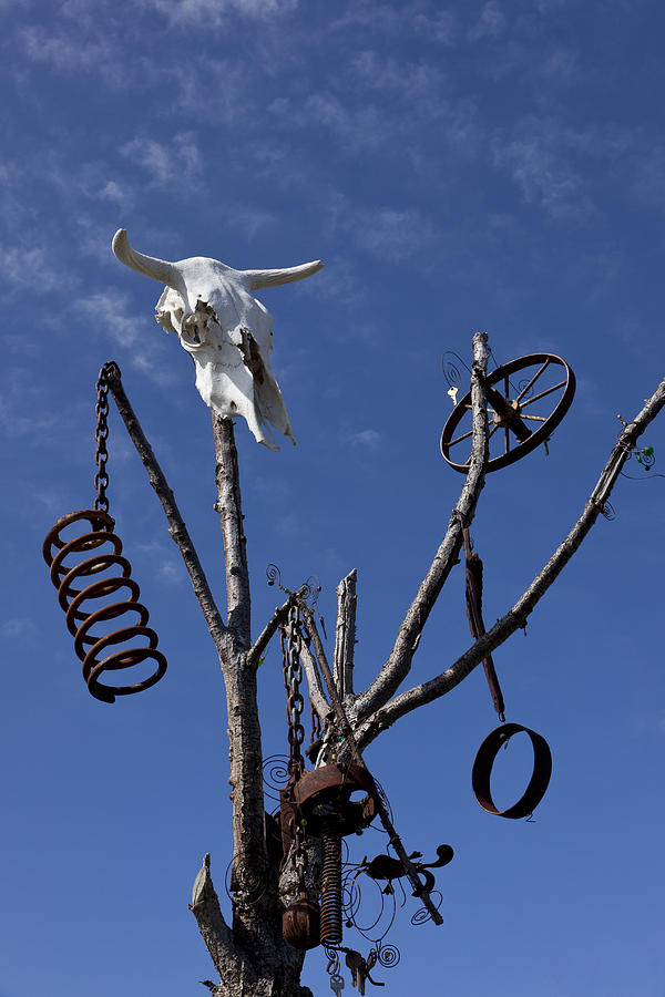 Steer Skull In Tree Photograph  - Steer Skull In Tree Fine Art Print