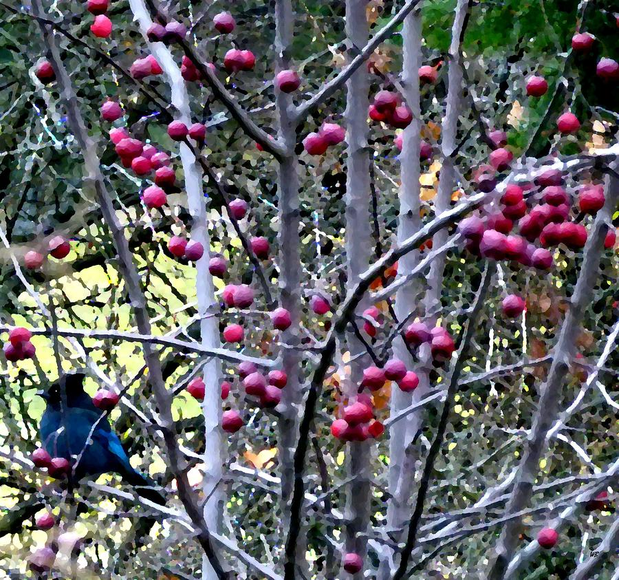 Stellar Jay In Crab Apples Digital Art  - Stellar Jay In Crab Apples Fine Art Print