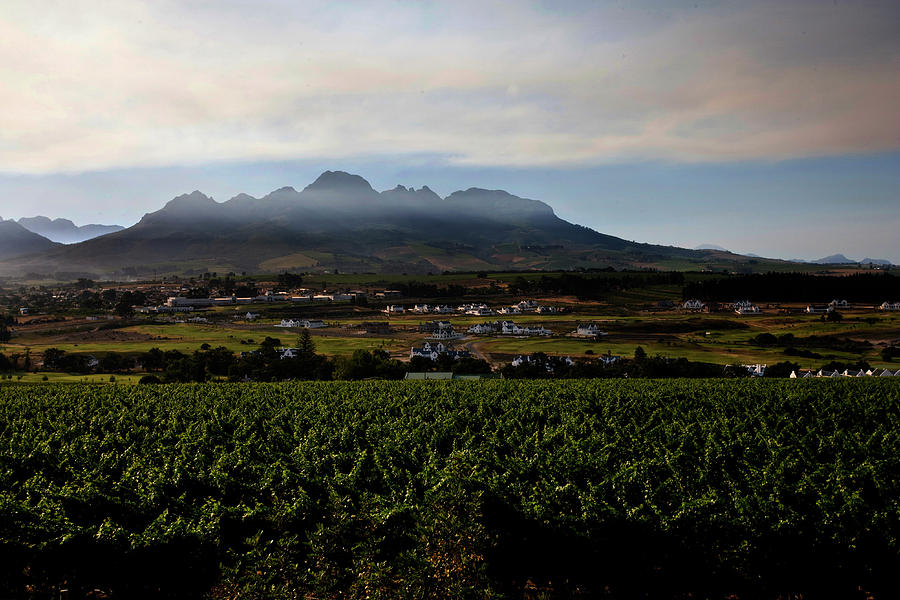 Stellenbosch Vineyard Photograph  - Stellenbosch Vineyard Fine Art Print