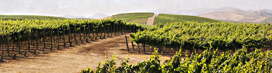 Step Into My Vineyard Photograph  - Step Into My Vineyard Fine Art Print