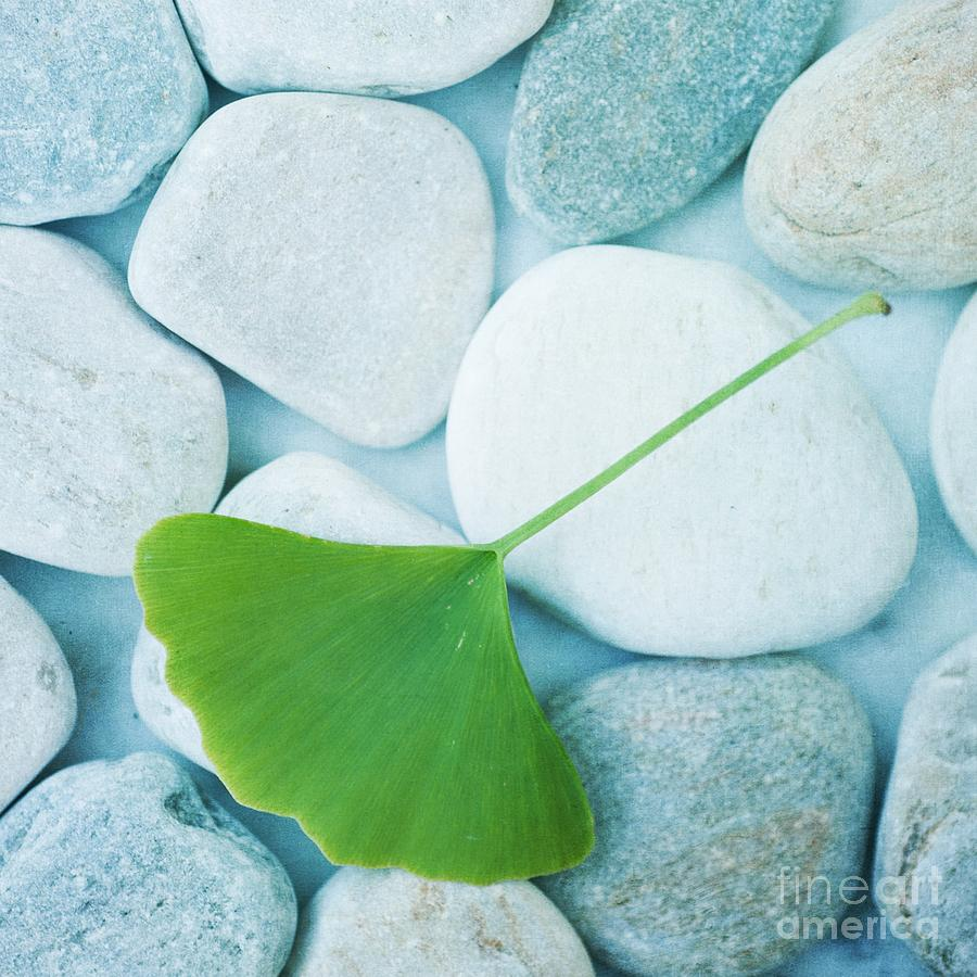 Stones And A Gingko Leaf Photograph