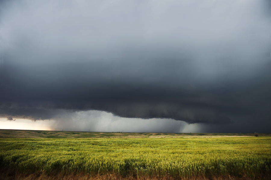 Дождливая погода вызывает у свердловских аграриев тревогу за урожай
