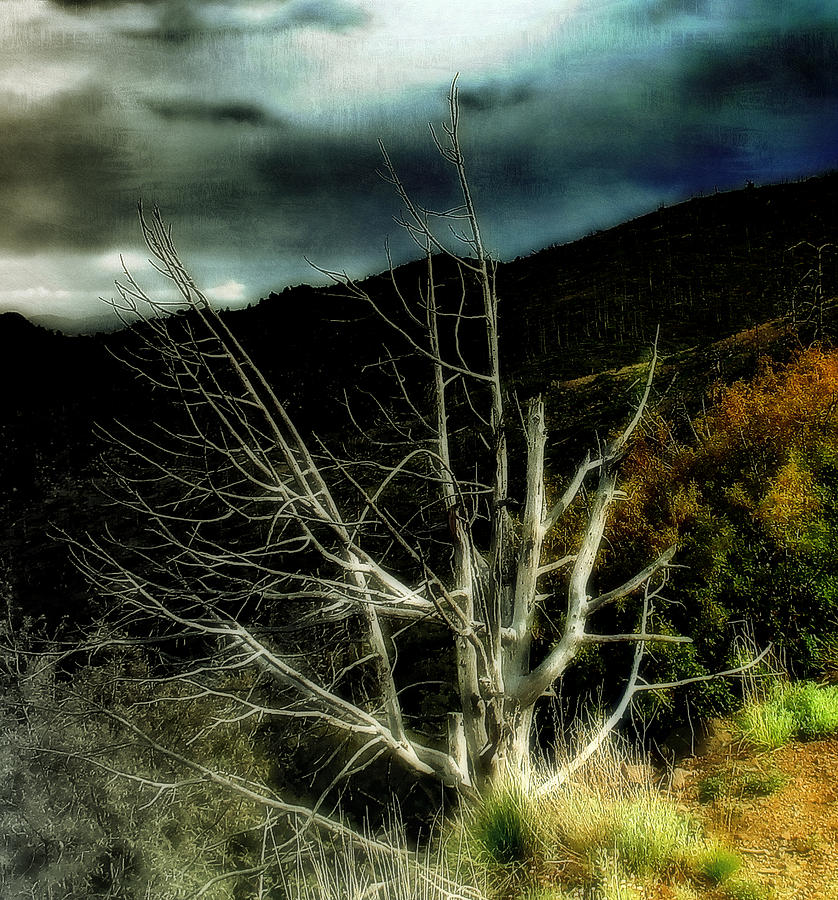 Storm Over The Jemez Mountains Photograph  - Storm Over The Jemez Mountains Fine Art Print