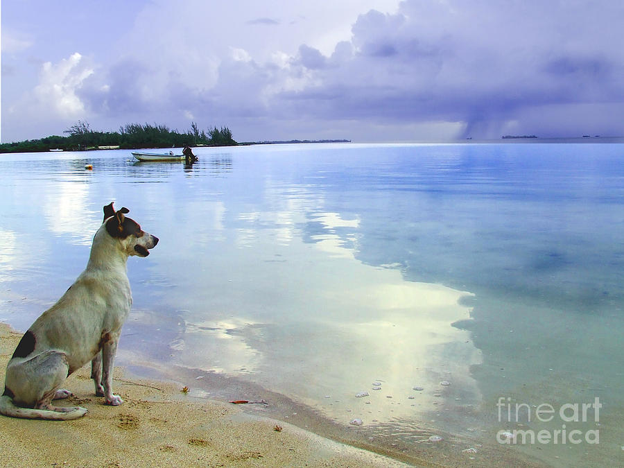 Storm Watcher Photograph  - Storm Watcher Fine Art Print