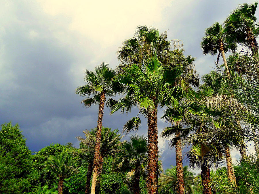 Stormy Skies And Palms Photograph