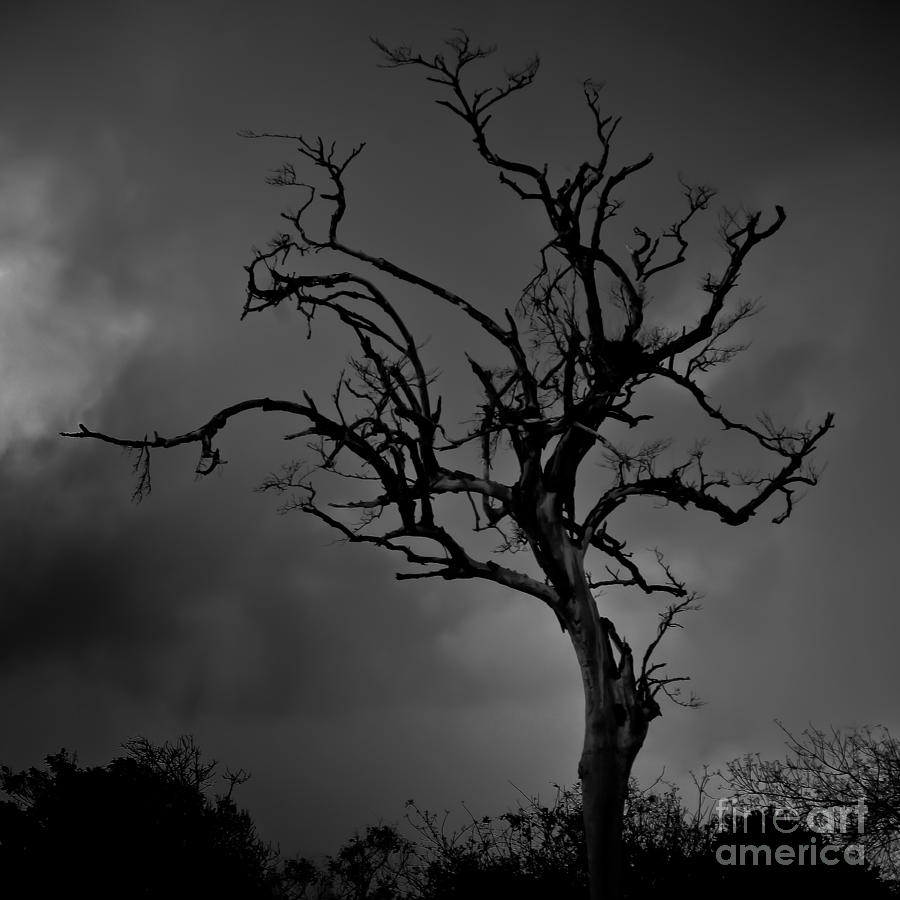 Stormy Tree Photograph
