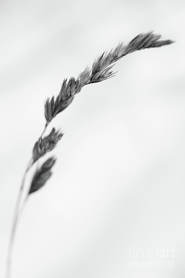 Straw Photograph