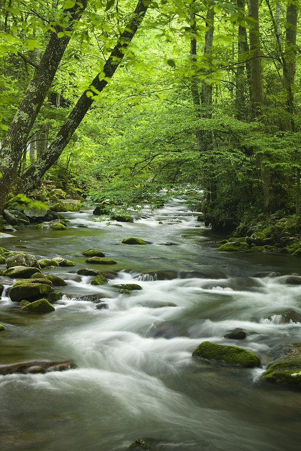 Stream In The Smokies Photograph  - Stream In The Smokies Fine Art Print