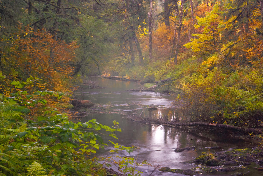 Stream Of The Fall Photograph