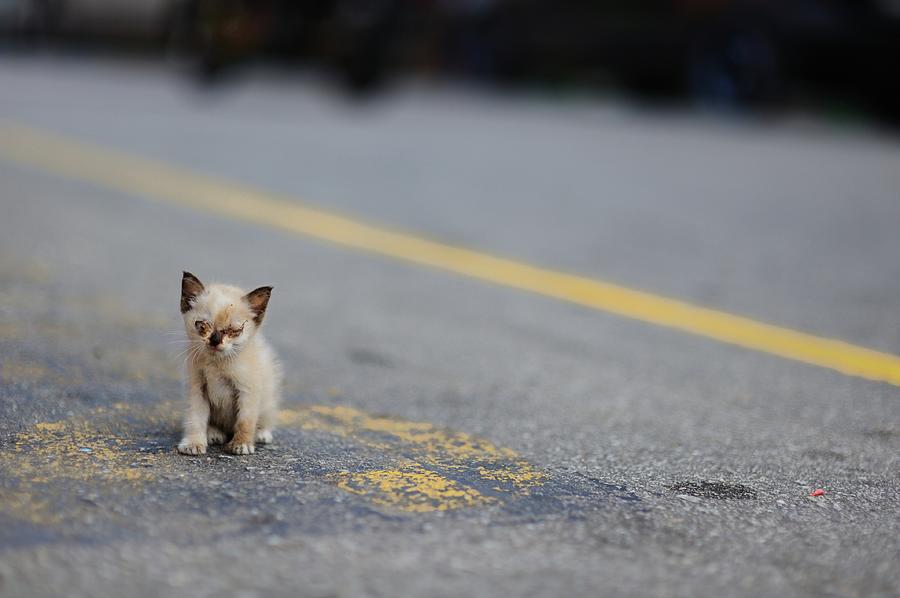 Horizontal Photograph - Street Kitten On Road by Carlina Teteris