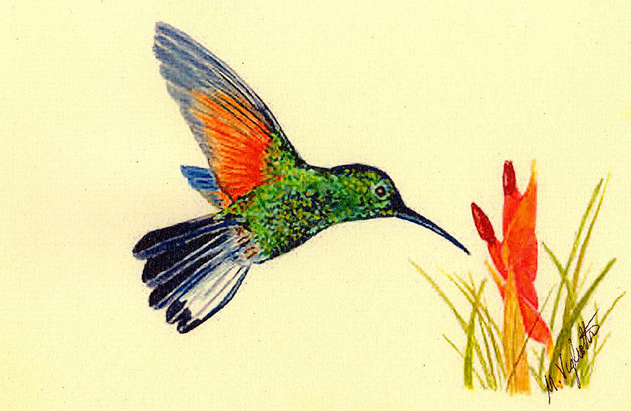 Stripe Tailed Hummingbird Painting  - Stripe Tailed Hummingbird Fine Art Print