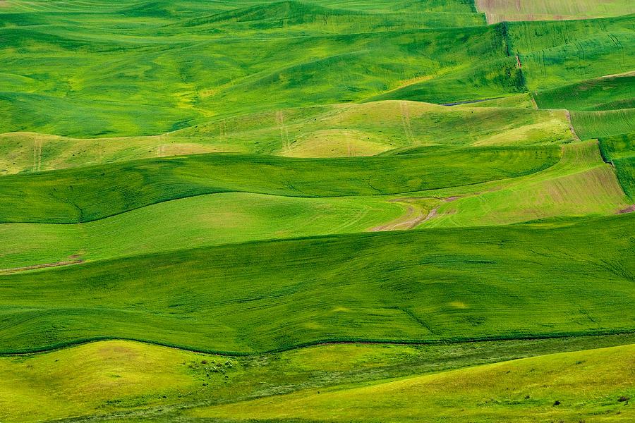 The Palouse Photograph - Stripes by Dan Mihai