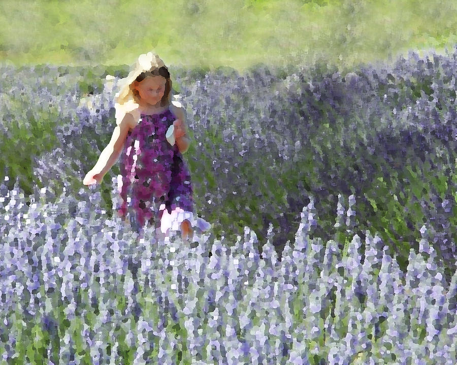 Stroll Through The Lavender Photograph