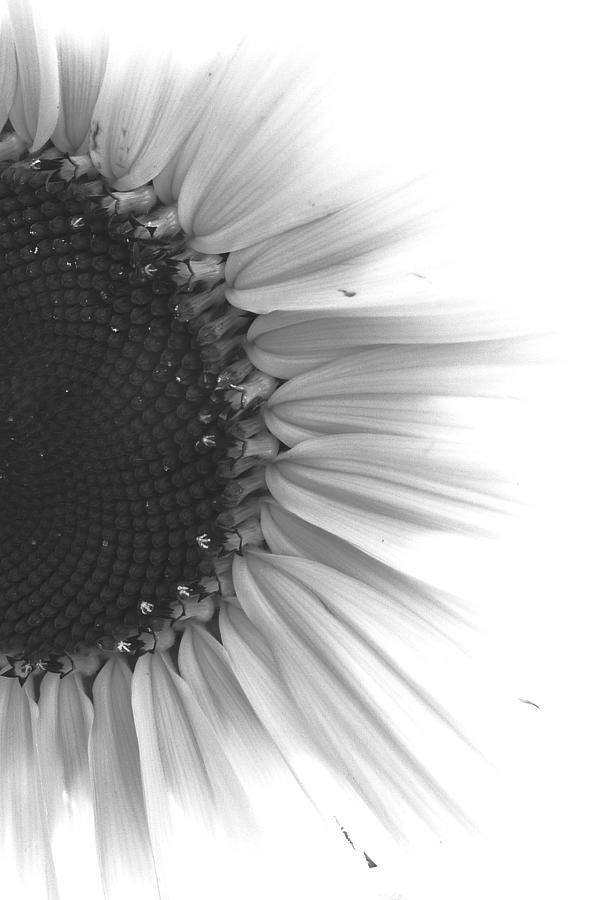 Sunflower Digital Art - Structures II by Scott Miller