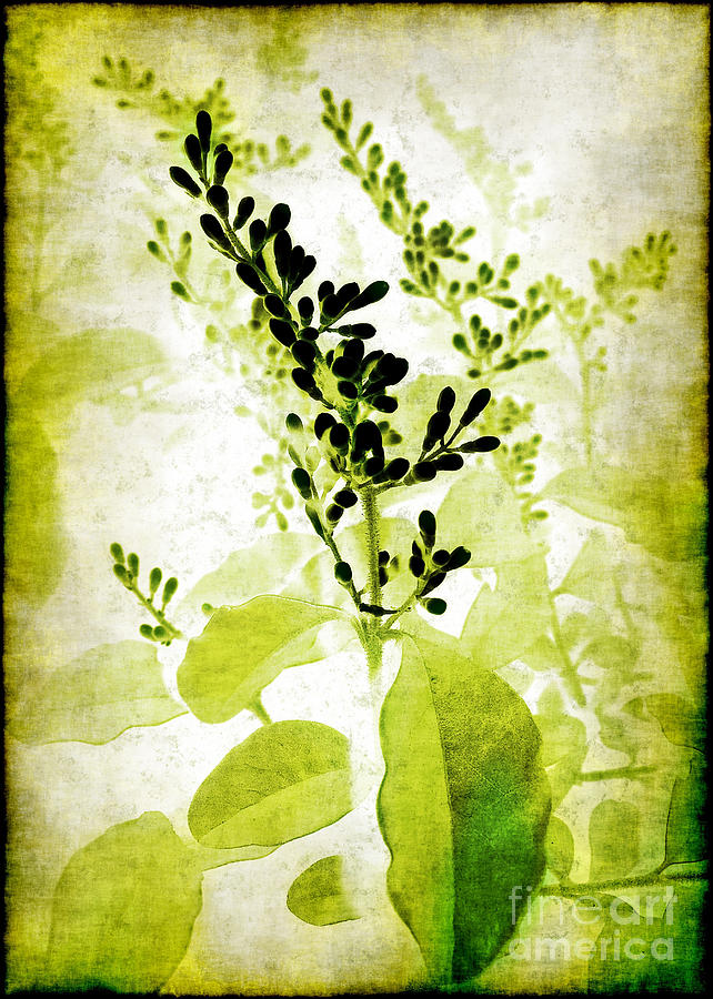 Study In Green Photograph