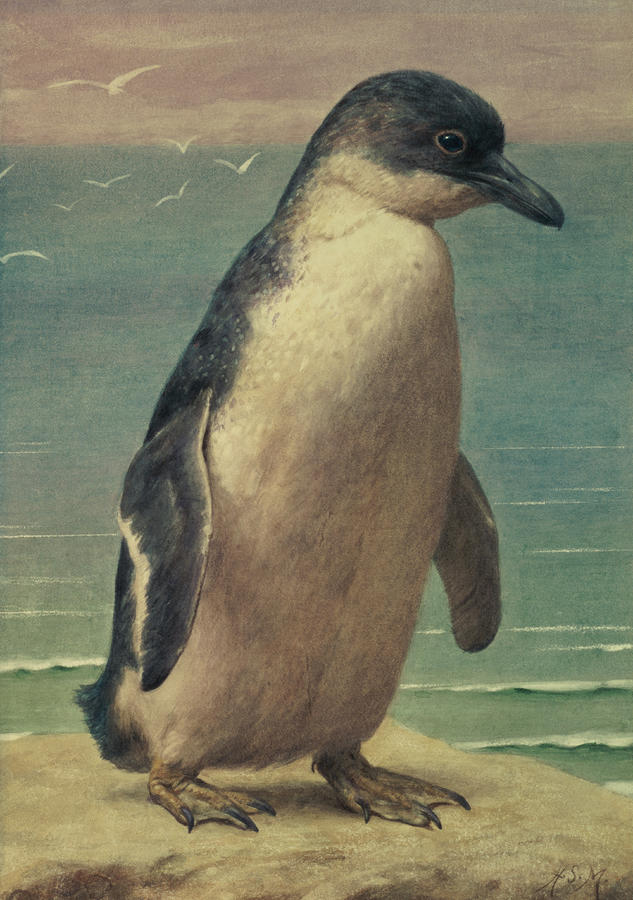 Study Of A Penguin Painting  - Study Of A Penguin Fine Art Print