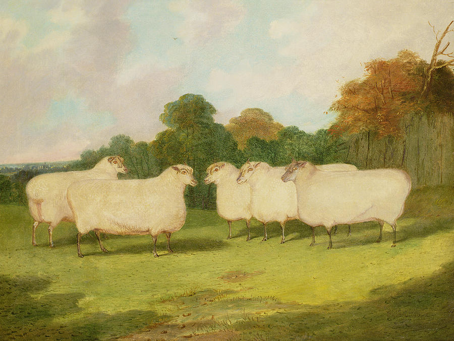 Study Of Sheep In A Landscape   Painting  - Study Of Sheep In A Landscape   Fine Art Print