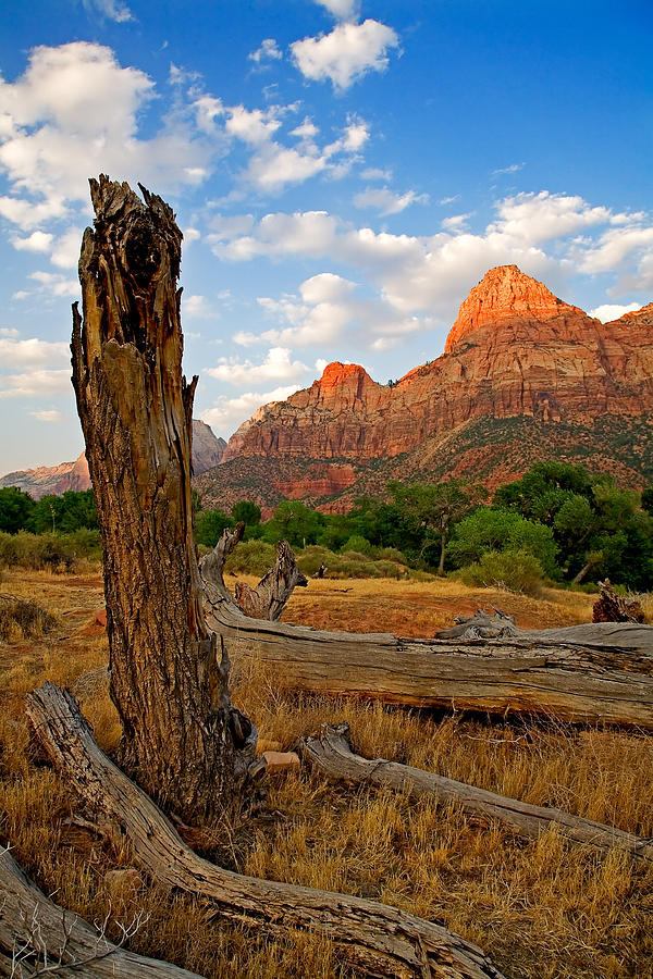 Stumped At Zion Photograph