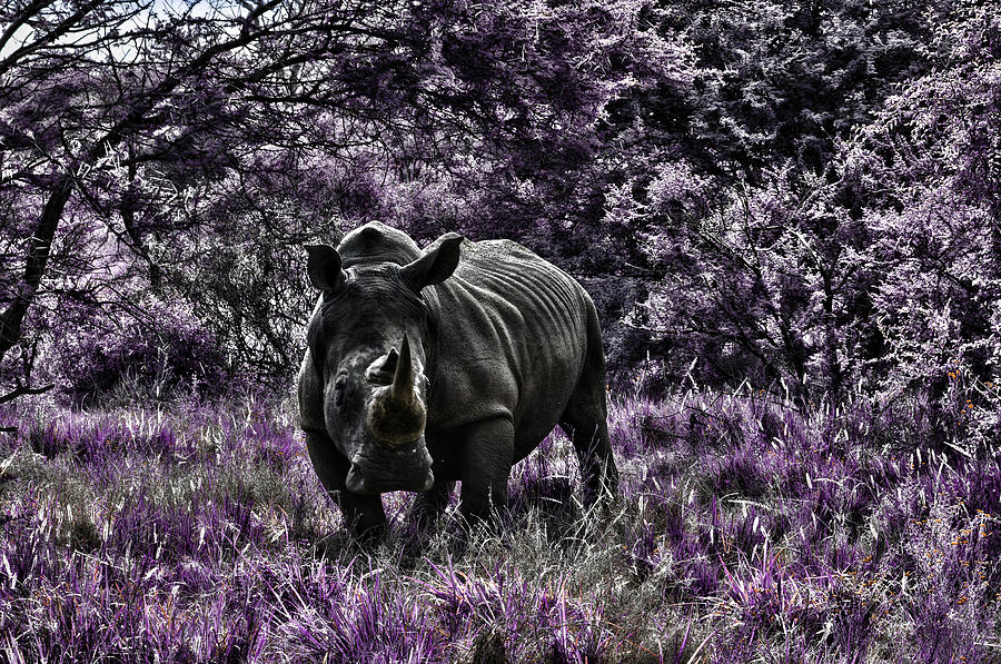 Styled Environment-the Modern Trendy Rhino Photograph