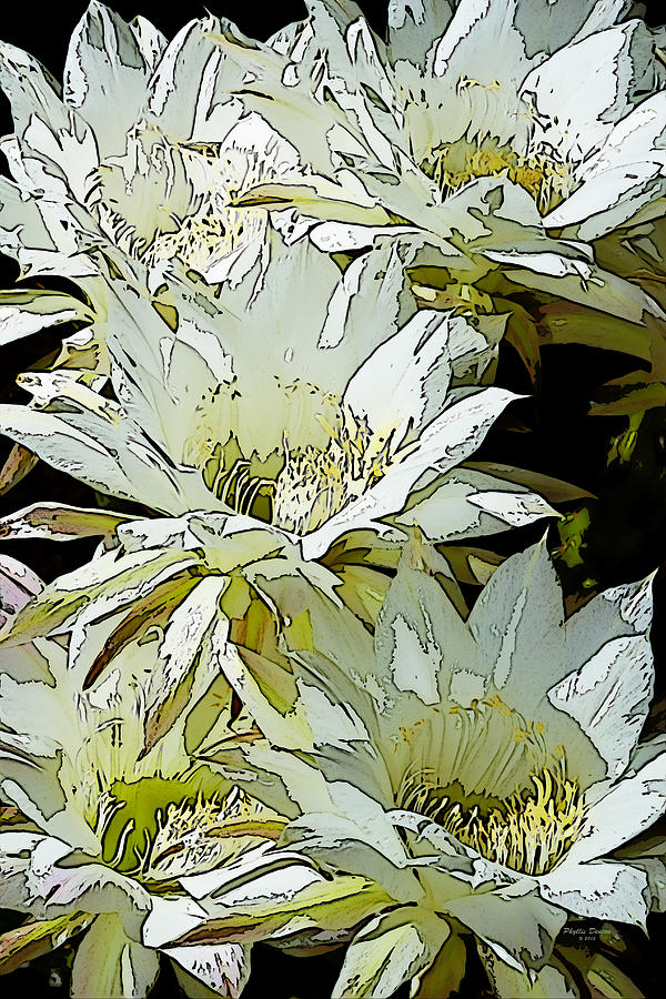 Flowers Photograph - Stylized Cactus Flowers by Phyllis Denton