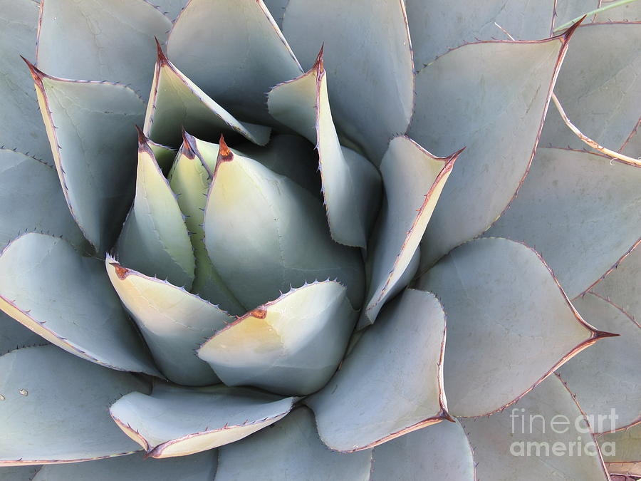 Succulent Photograph - Succulent by Tracy L Teeter